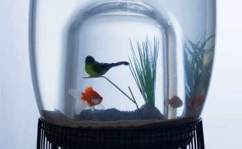 Sangkar burung (constanceguisset.com)