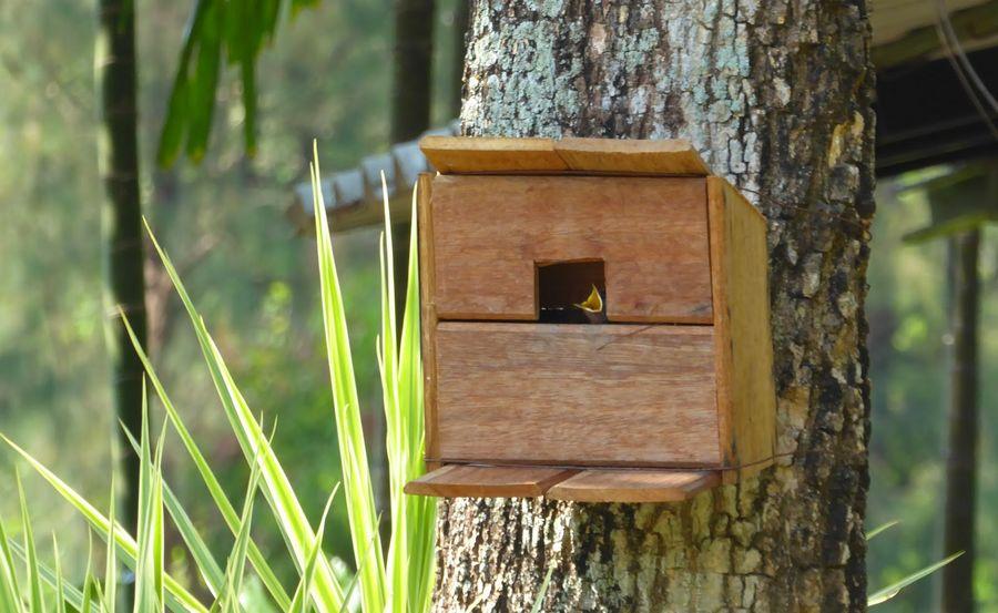 Sarang burung Kacer (sustainablelivingthailand.blogspot.co.id)