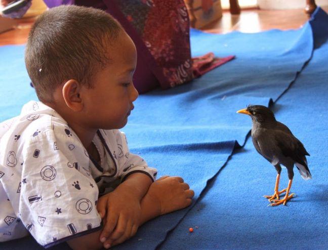 Bulbul menjaga Revo (ida-nurlaila.blogspot.co.id)
