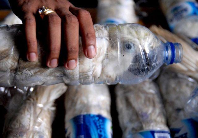 Burung Kakatua dalam botol air mineral (nypost.com)