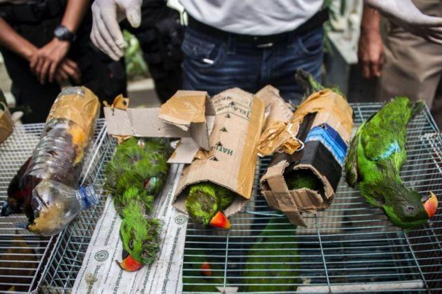 Burung dimasukkan kardus (todayonline.com)