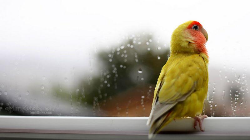 11 Tips Merawat Burung di Musim Hujan Agar Performa Tidak Menurun