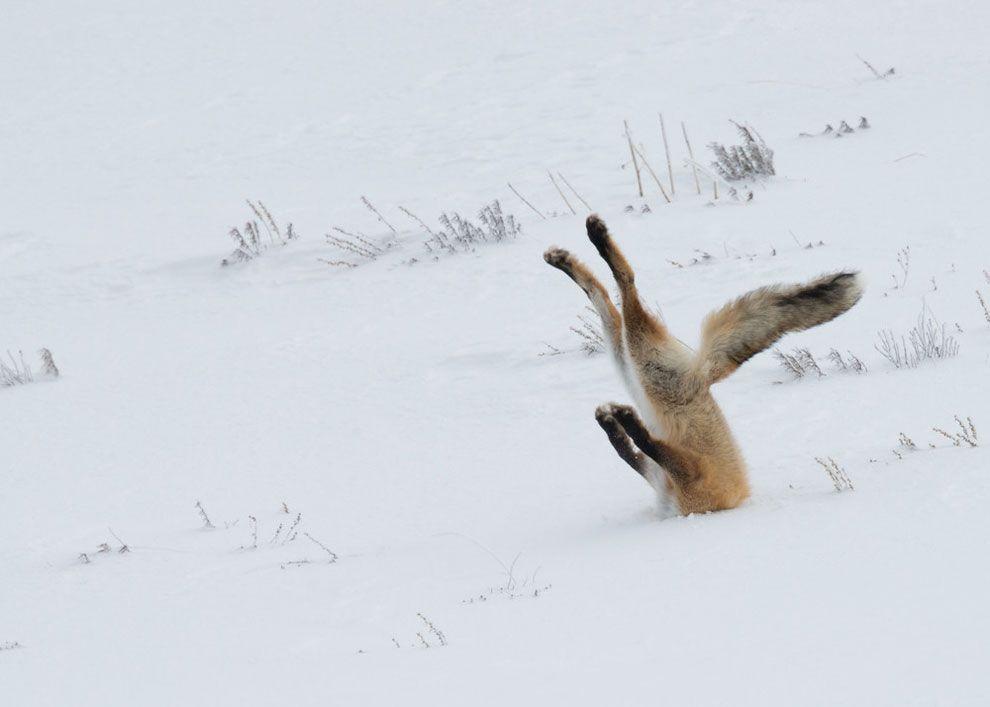 (Photo by Angela Bohlke Barcroft Images Comedy Wildlife Photography Awards 2016)