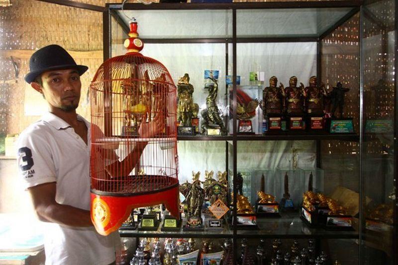 Lovebird Putri Dewi, Dulu Belinya Rp 10 Juta Sekarang Ditawar Rp 600 Juta