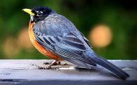 Burung stres (youtube.com)