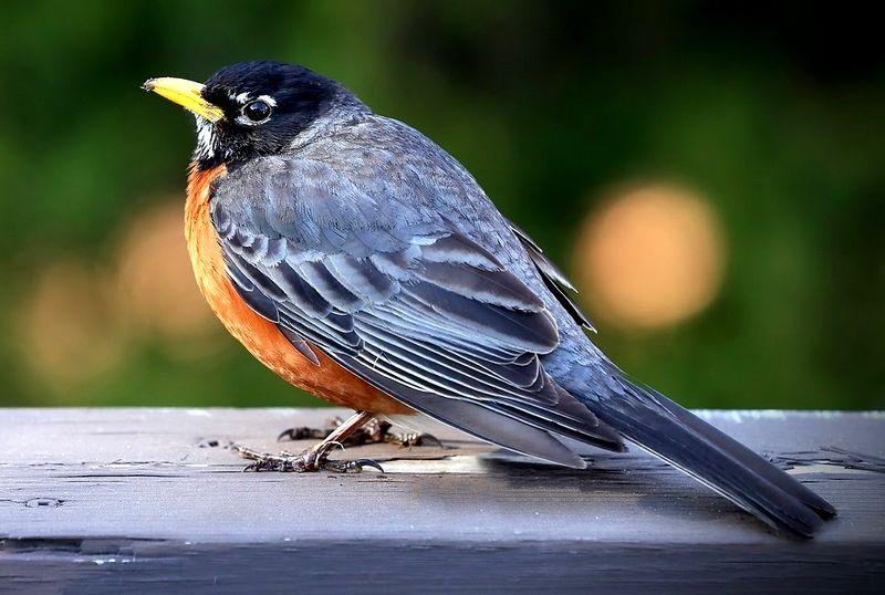 Ciri-Ciri Burung Stres Lengkap dengan Penyebab dan Cara Mengatasinya