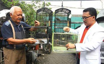 Burung Cucak Rowo (jawapos.com)