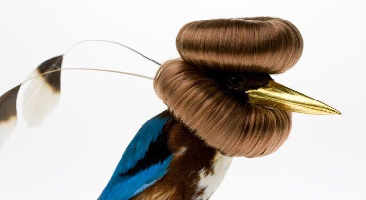 Burung cantik 1 (Karleyfeaver.com)