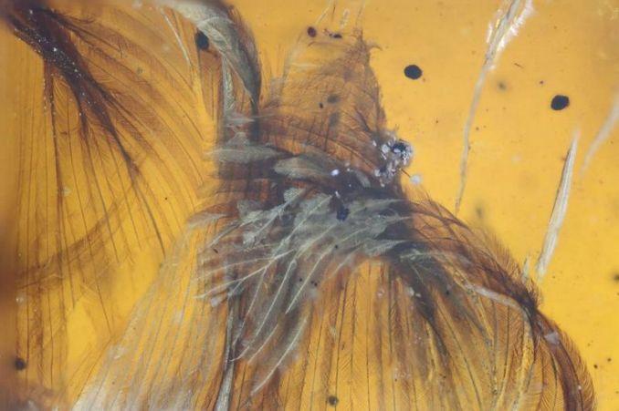 Bulu burung purba (Ming bai-nationalgeographic.com)