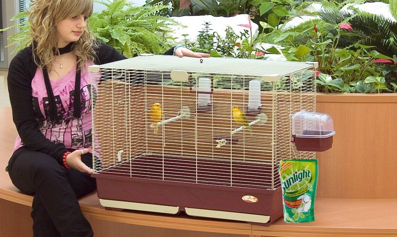 Burung Kenari mandi sabun cuci piring (birdcageguide.com)