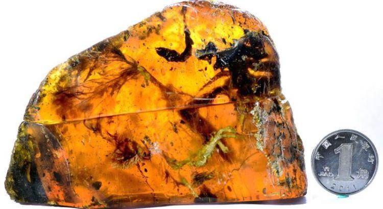 Fosil burung purba berusia 99 juta tahun (Lida Xing-gizmodo.com)