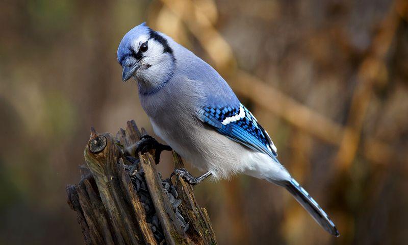 Burung Unik Ini Hanya Berkicau Jika Ada Kematian