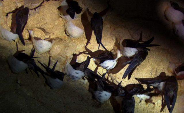 Kisah Sukses Pengusaha Sarang Burung Walet yang Punya 10 Istri, Omzet Per Tahun Rp 2 Miliar