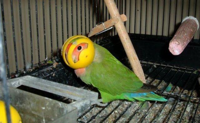 5 Cara Mengatasi Burung yang Sering Mengacak-acak Pakan Hingga Berantakan