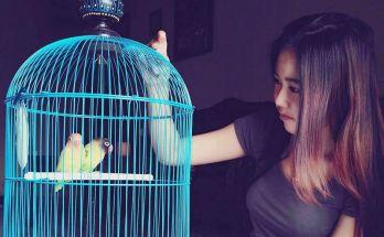 Perawatan Lovebird jantan (Instagram.com)
