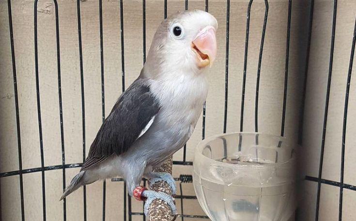 Air minum Lovebird biar rajin bunyi (lovebirdseo.net.)