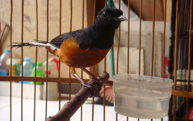 5 Jenis Air Minum Ini Baik atau Tidak Diberikan ke Burung?
