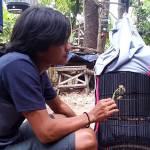 Perawatan Lovebird Paud Rajin Ngekek Durasi Panjang (burungnews.com)