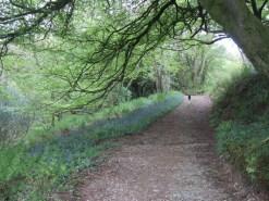 Bluebells Country Footpath Bristol