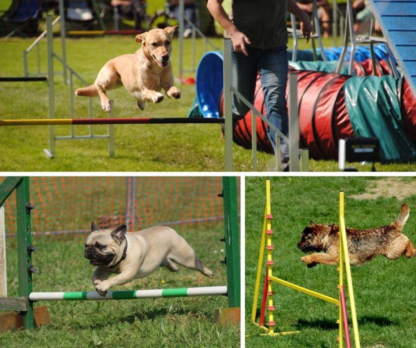 Dog Agility Dog Fest Bristol