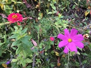 Herbst in Rheinbreitbach 2