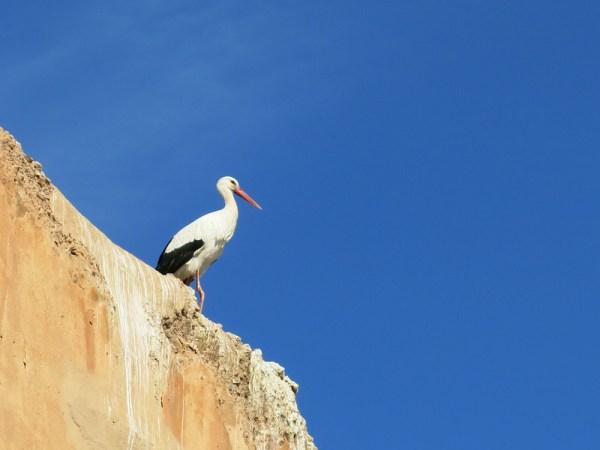 Storch auf den Zinnen vom el-Badi-Palast