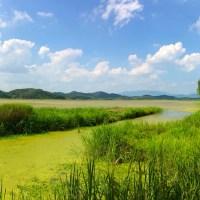 Changnyeong Upo Wetlands (창녕 우포늪-생태공원)
