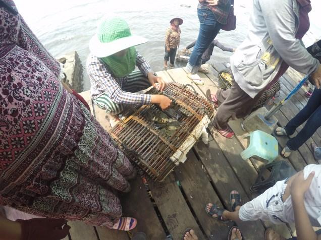 Sacando los cangrejos para cocinarlos