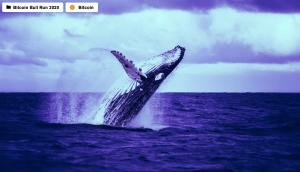 Lee más sobre el artículo La ballena de Bitcoin de miles de millones de dólares emerge a medida que el precio rompe máximos históricos
