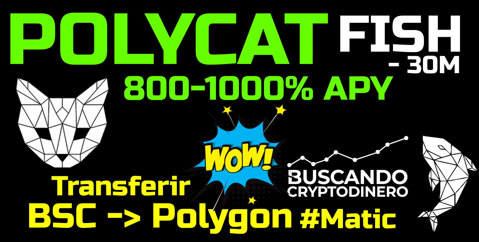 En este momento estás viendo 🔥 POLYCAT 800% APY ➤ POLYGON #matic ¿Como transferir desde BSC a Polygon? Y ganar de forma pasiva!!!