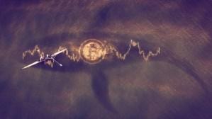 Lee más sobre el artículo Las ballenas Bitcoin están disminuyendo: ¿Qué significa eso para el mercado?