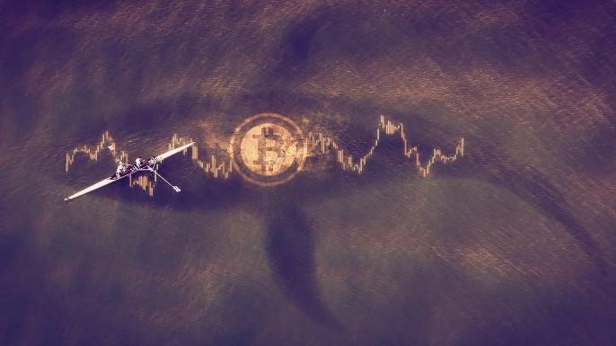 En este momento estás viendo Las ballenas Bitcoin están disminuyendo: ¿Qué significa eso para el mercado?