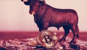 Lee más sobre el artículo ¿Apenas Comienza la Corrida de Toros Bitcoin? Los Expertos Opinan
