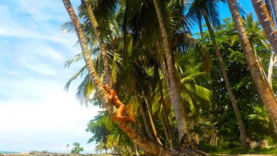 Dieciocho kilómetros de la preciosa costa caribeña. Desde Puerto Viejo a Manzanillo