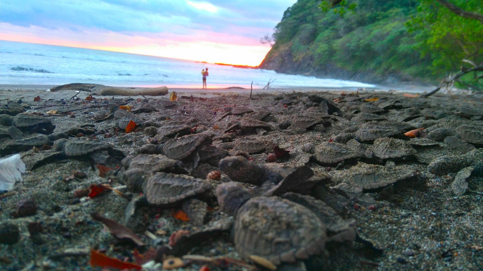Playa de Corozalito, Guanacaste Costa Rica