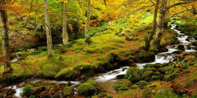 otoño en Redes