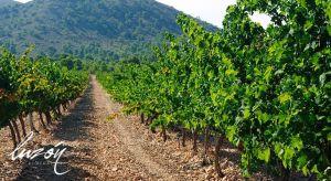 Rutas del vino de Jumilla