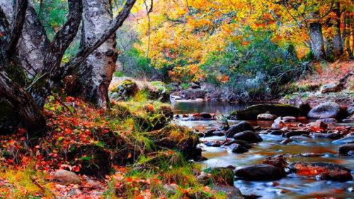 otoño en Montejo