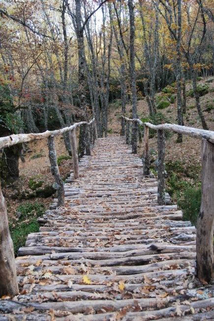 Puente en el bosque de Tejedelo