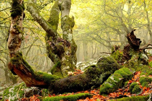 La Pedrosa. Mejores bosques