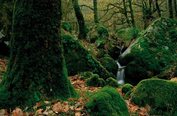 Rutas de senderismo. que ver en el Parque Natural de los Alcornocales