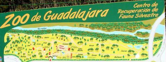 Visitar el zoo de Guadalajara