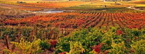 ruta del vino.