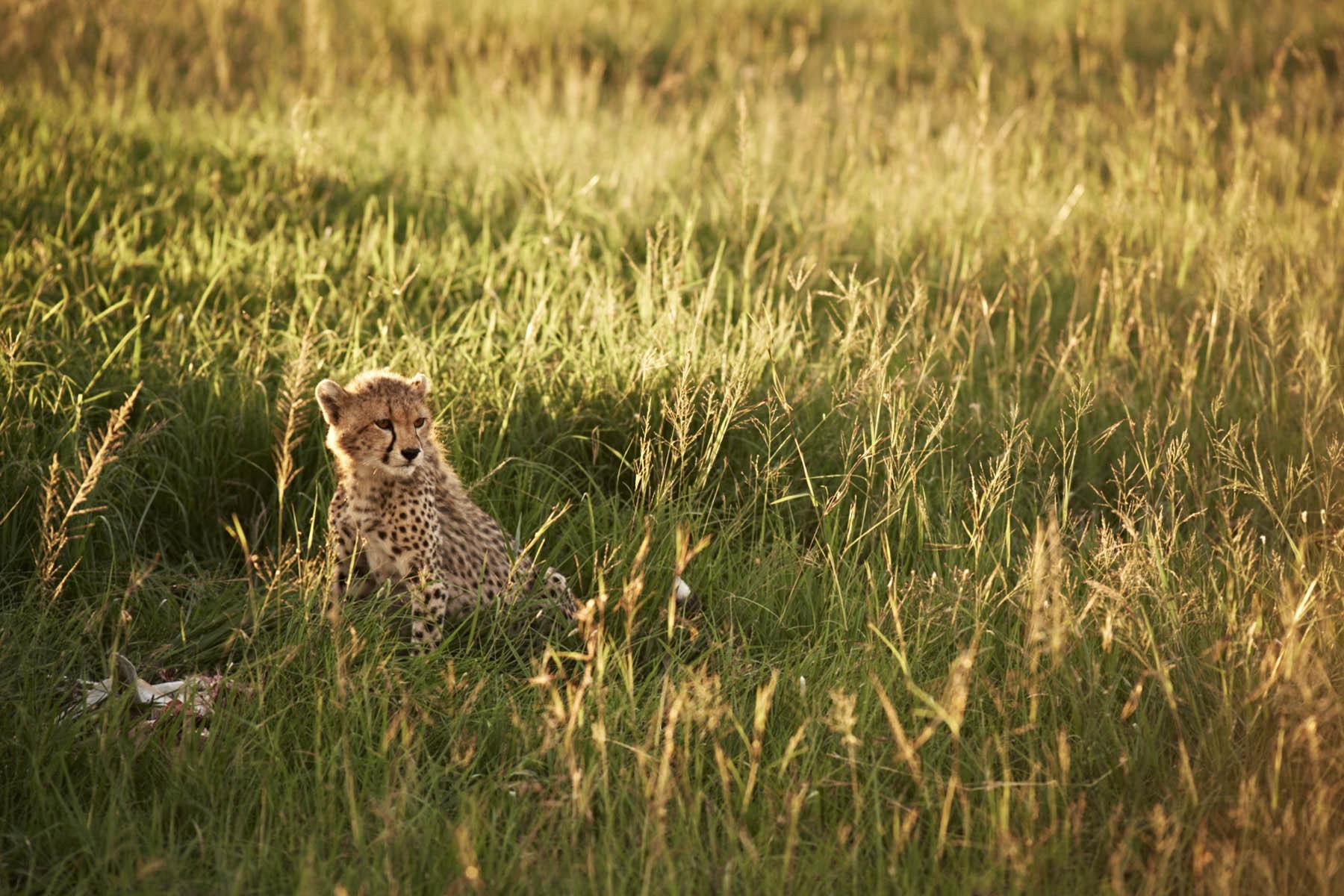 serengeti-15