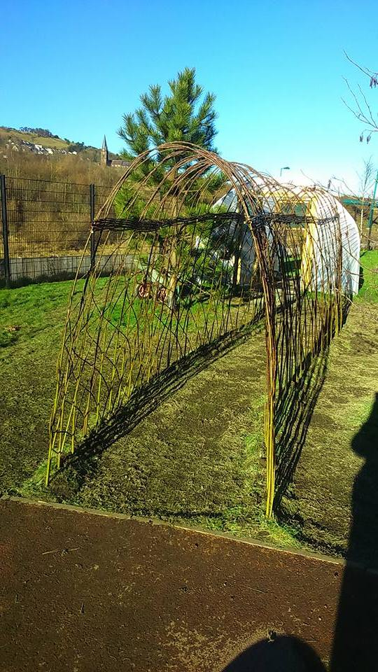 Willow tunnel within school grounds