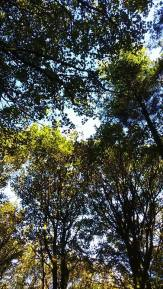 views of trees relieves stress - stress awareness month