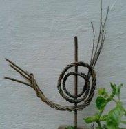 willow snail