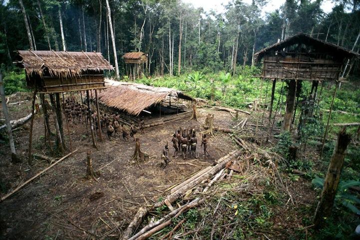 What do Amazon tribes eat? | Bushcraft Buddy