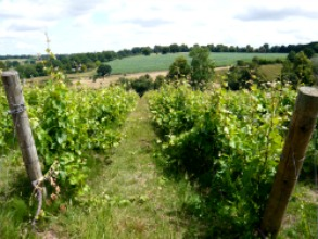 English Wine Week - 25 - 31 May 2015: English Wine Tasting: From Vine to Glass: Taste a'Becketts, Chapel Down, Ridgeview; celebrating English Wine Week