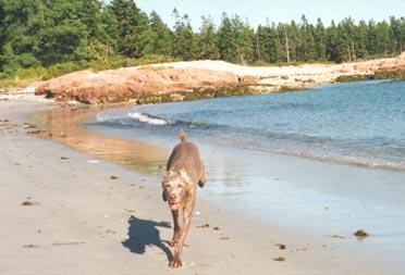 Tika on the beach